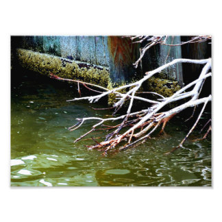 Impression Photo Choses de rivière