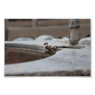 Impression Photo colonie d'abeille