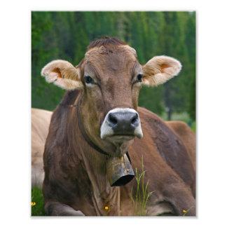 Impression Photo Copie alpine de vache