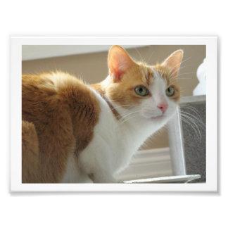 Impression Photo Copie de chat