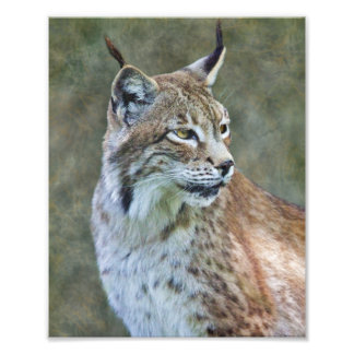 Impression Photo Copie de Lynx de Sibérien