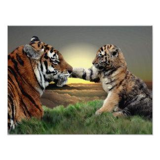 Impression Photo Copie de tigre et d'édition de CUB Digital