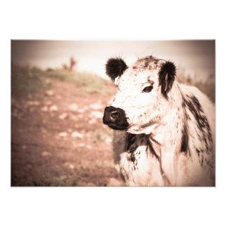 Impression Photo Copie de vache