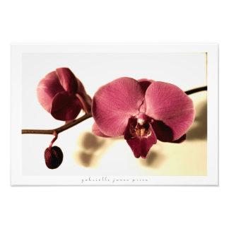 """Impression Photo Copie décorative antique de l'orchidée    (19"""" x"""