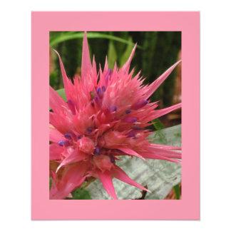 Impression Photo Copie exotique de fleur