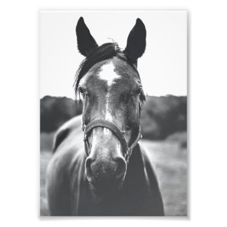 Impression Photo Copie noire et blanche de portrait de cheval