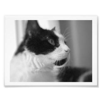 Impression Photo Copies de chat !