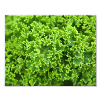 Impression Photo De fin feuille vert botanique - (feuille)