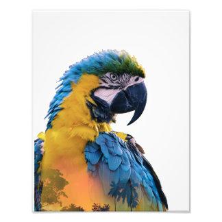 Impression Photo Double exposition de perroquet