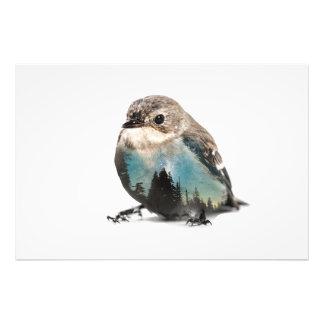 Impression Photo Double exposition d'oiseau