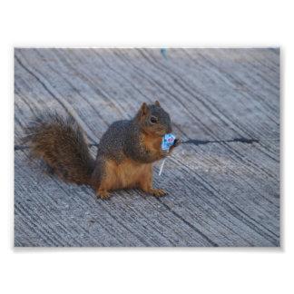 Impression Photo Écureuil rouge heureux de queue