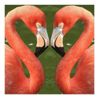 Impression Photo Flamingo_20170701_by_JAMFoto