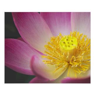 Impression Photo fleur de lotus