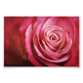 Impression Photo Fleur de rose de rose avec la texture grunge