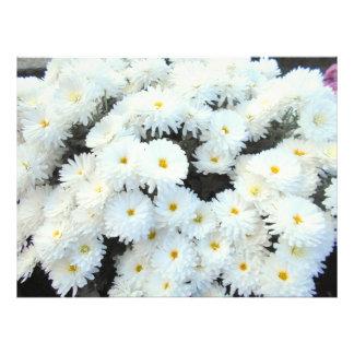 Impression Photo Fleurs blanches de chrysanthème