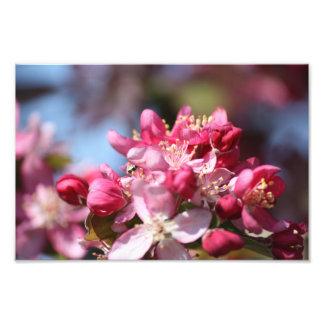 Impression Photo Fleurs de cerisier