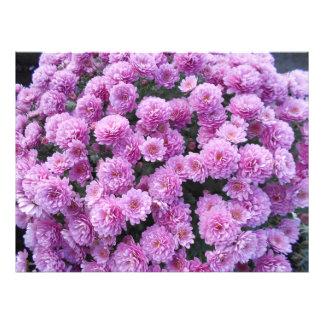 Impression Photo Fleurs roses de chrysanthème