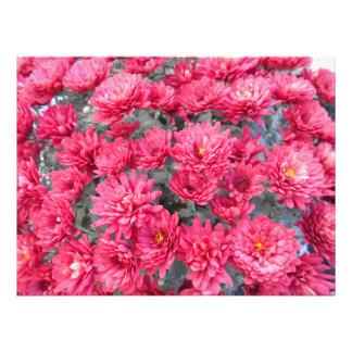 Impression Photo Fleurs rouges de chrysanthème