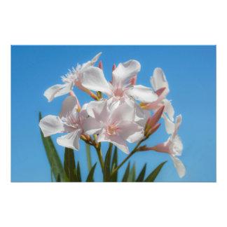 Impression Photo Flora blanche