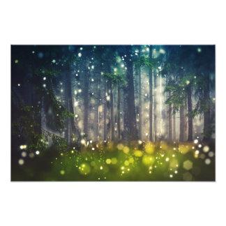 Impression Photo Forêt, arbres sur la clairière, aube