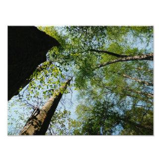 Impression Photo Forêt de la Californie