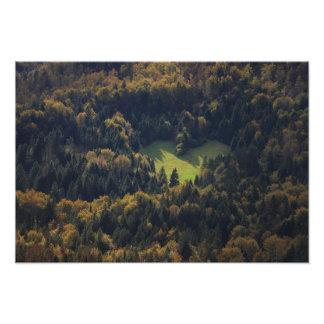 Impression Photo Forme de coeur dans une forêt en Slovénie