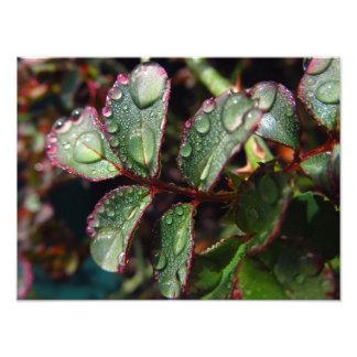 Impression Photo Gouttes de pluie sur le feuille rose d'arbre