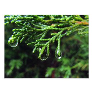 Impression Photo Gouttes de pluie sur une branche d'arbre (#2)