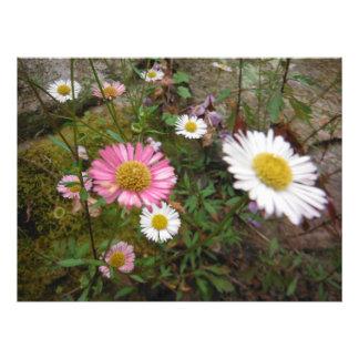 Impression Photo grand jardin de fleurs lumineux