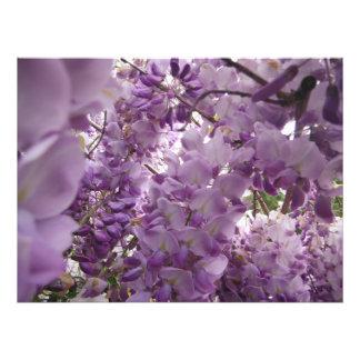 Impression Photo grand jardin de fleurs lumineux pourpre