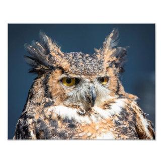 Impression Photo grand portrait du hibou 14x11 à cornes