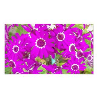 Impression Photo grandes fleurs lumineuses