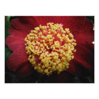 Impression Photo grands rouge et jaune