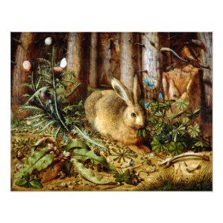 Impression Photo Hans Hoffmann un lièvre dans la forêt
