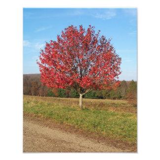 """Impression Photo imprimez 14"""" x 11"""" bel arbre rouge dans le domaine"""