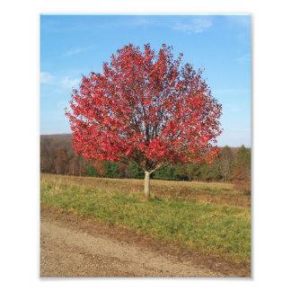 """Impression Photo imprimez 8"""" x 10"""" bel arbre rouge dans le domaine"""
