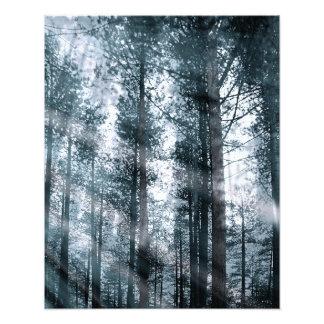 Impression Photo Je parle aux arbres…
