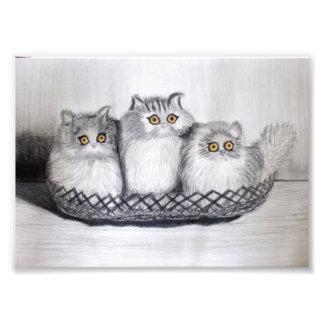 Impression Photo kittiess