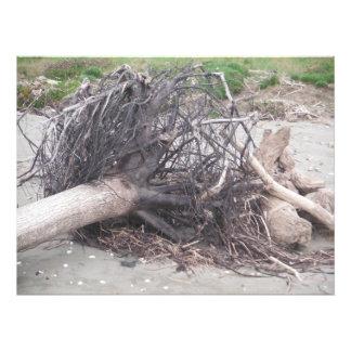 Impression Photo le vieux sembler de sable de plage rustique