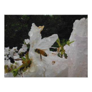 Impression Photo l'eau de pluie d'abeille de fleur blanche