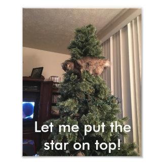 Impression Photo Les aides de chat décorent l'arbre