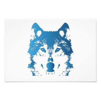 Impression Photo Loup de bleu glacier d'illustration