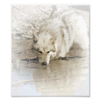 Impression Photo Loup rôdant dans l'illustration originale de