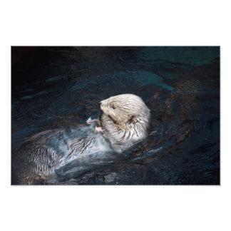 Impression Photo Loutre mangeant le zoo sauvage aquatique de nature