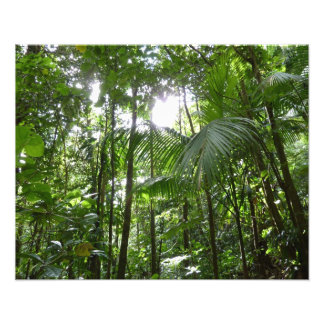 Impression Photo Lumière du soleil par le vert tropical d'auvent de