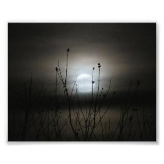 Impression Photo Lune et arbres