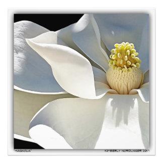 Impression Photo Magnolia par Kimberly Nordlinger