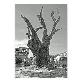 Impression Photo Matala. Un arbre dans la mémoire des hippies.