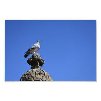 Impression Photo Oiseau de New York City de ciel bleu de pigeon de