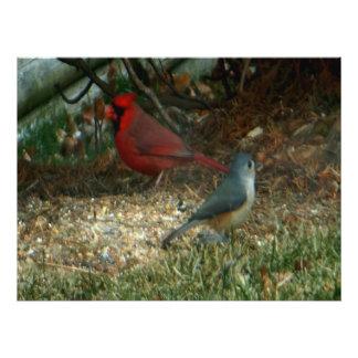 Impression Photo Oiseaux cardinaux rouges de mésange